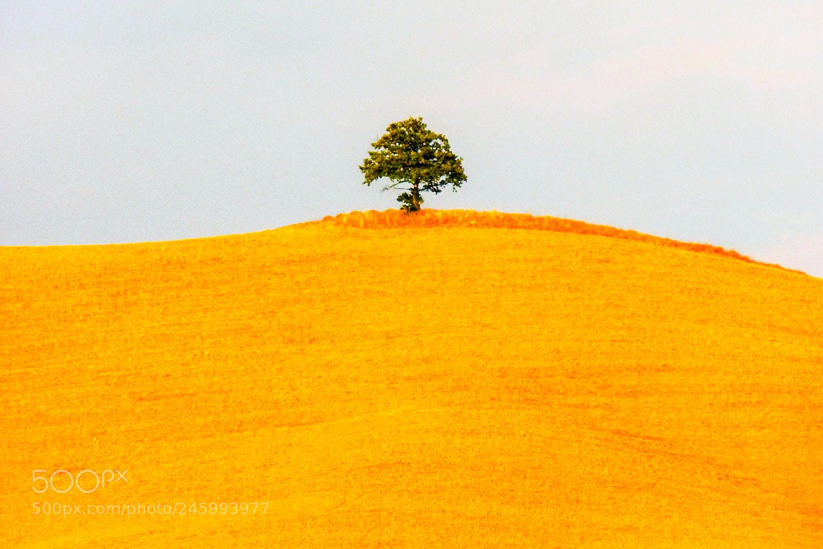 "Nikon Coolpix S630 sample photo. ""Tree"" photography"