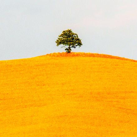 tree, Nikon COOLPIX S630