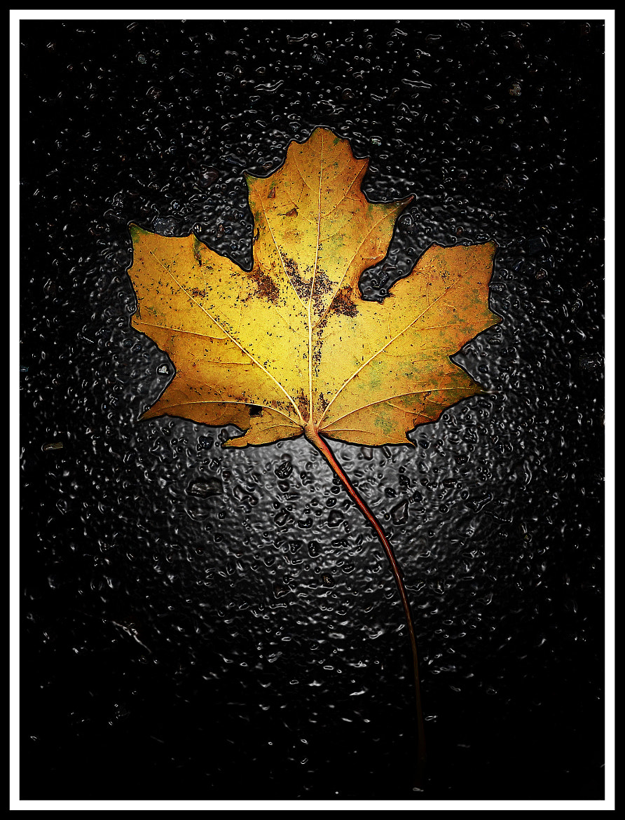 Photograph The leaf... by Jem Salmon on 500px