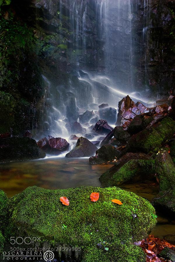 Photograph - Corazón verde - by Oscar  Peña on 500px