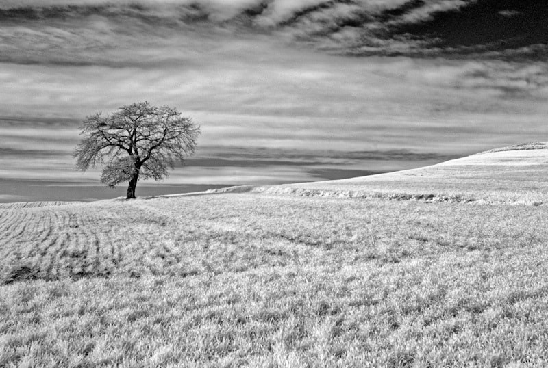 Photograph Lone Tree by Konstantinos Besios on 500px