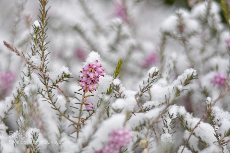 Photograph fresh snow by Elissar Khalek on 500px