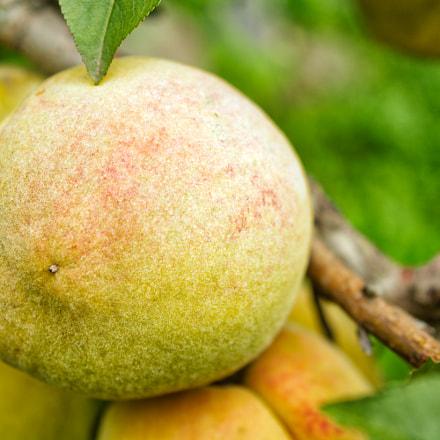 peach texture on tree, Nikon D7100, AF Zoom-Nikkor 35-135mm f/3.5-4.5 N