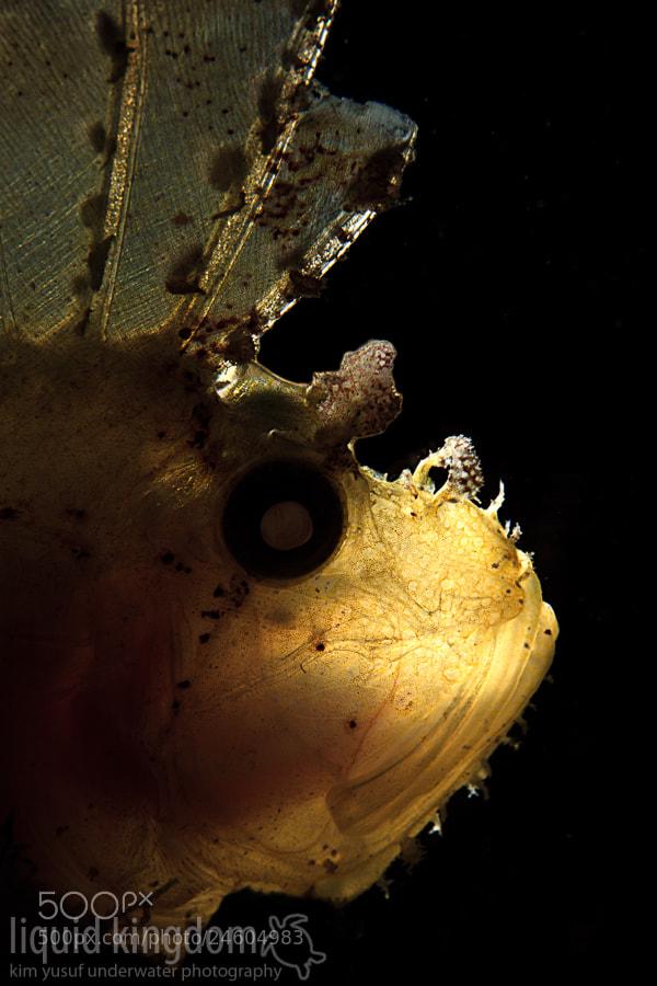 Photograph Leaf Scorpionfish by Kim Yusuf on 500px