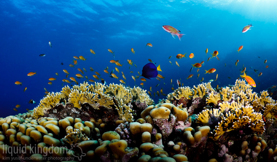 Photograph Red Sea V by Kim Yusuf on 500px
