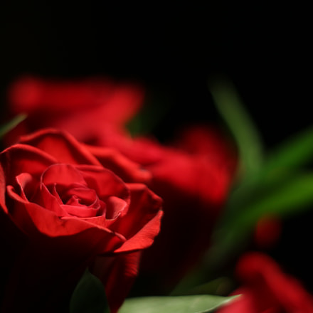 Valentine's Day, Canon EOS 70D, Canon EF 50mm f/1.8