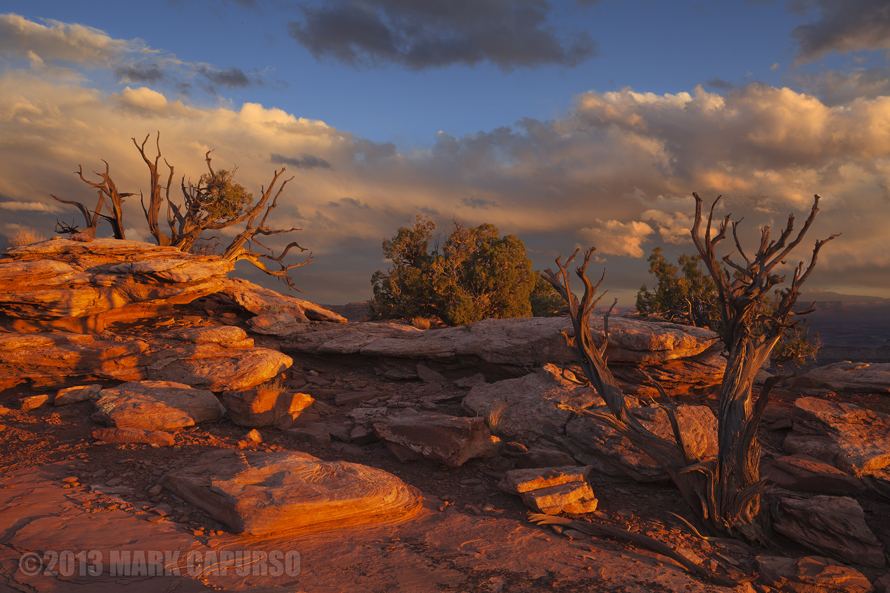 Photograph Spirit of Junipers Past by Mark Capurso on 500px