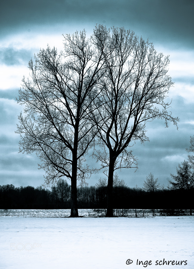 Photograph Two trees by Inge Schreurs on 500px