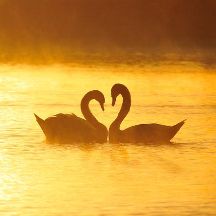 Valentines, Nikon D700