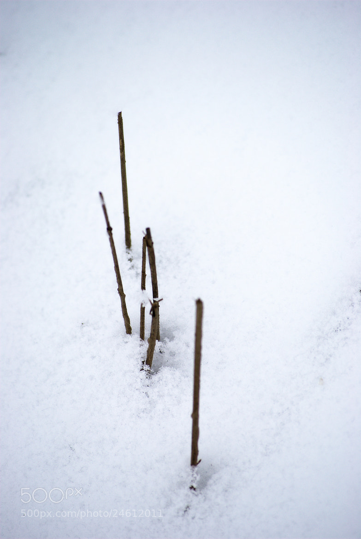 Photograph Sticks by Yann VDM on 500px