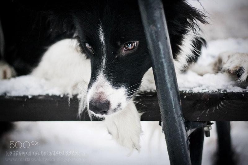 Photograph Winter musings by Marta Swakowska on 500px