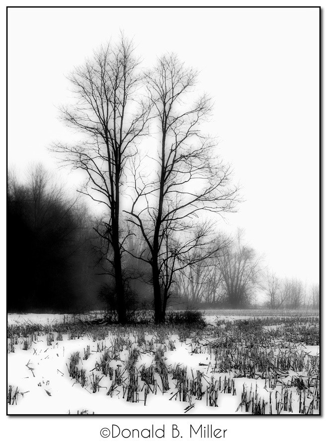 Photograph Trees and Corn Stalks by Donald Miller on 500px