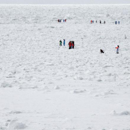 sea ice walkers, Nikon COOLPIX P7700