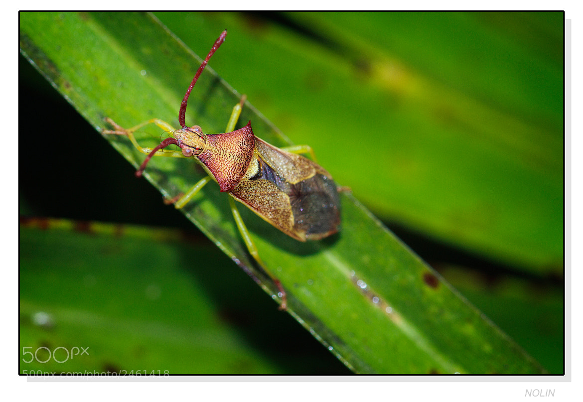 Photograph  BUG by MANUEL DE LA JARA on 500px