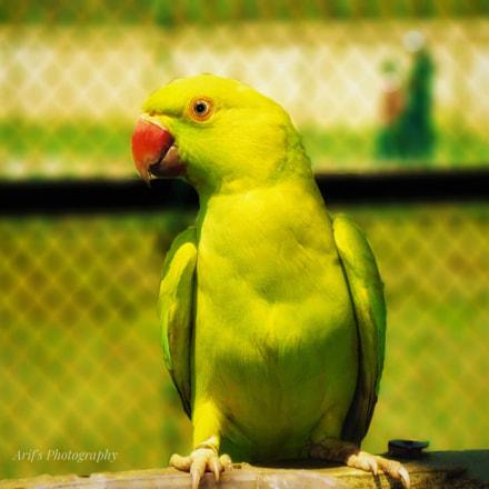 Parrot, Panasonic DMC-XS1