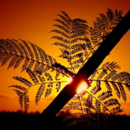 silhouettes in the sunset ...., Fujifilm FinePix SL1000