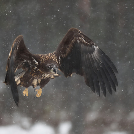 Flying through the snowfall, Nikon D4S