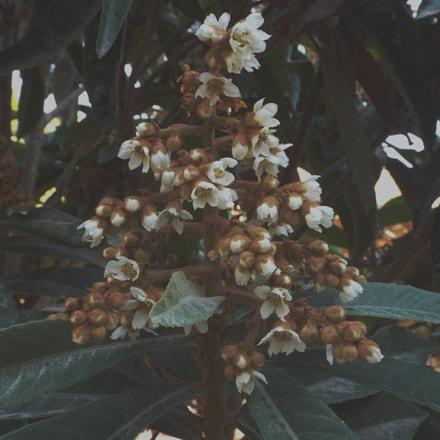 wonderful tree, Fujifilm FinePix S8200
