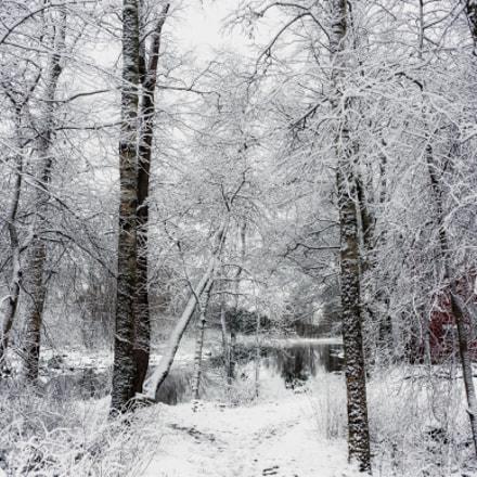 White trees, Nikon COOLPIX A