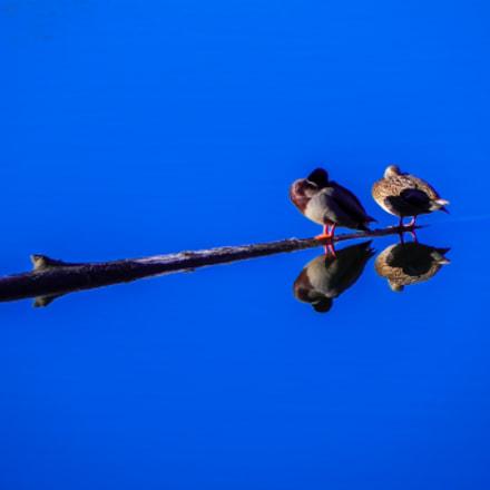 couple reflecting, Nikon COOLPIX P100