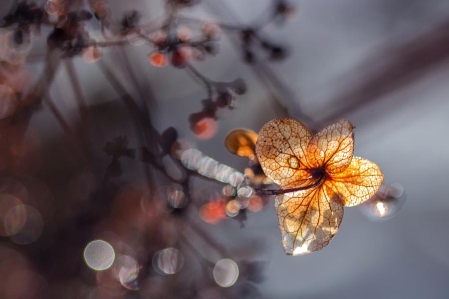 Lumineuse (luminous) de Christine Druesne sur 500px.com