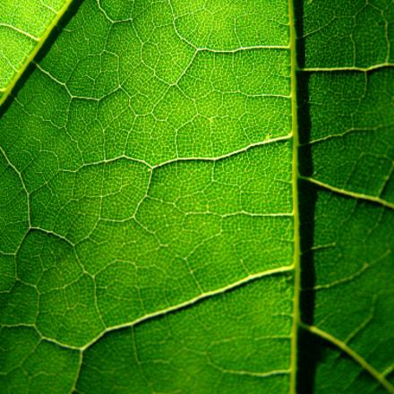 green day, Sony DSC-H7