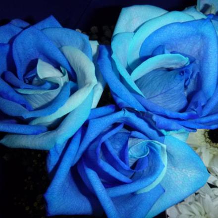 Roses, Panasonic DMC-FT30