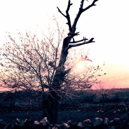 Syria.The sun will shine, Sony DSC-W130