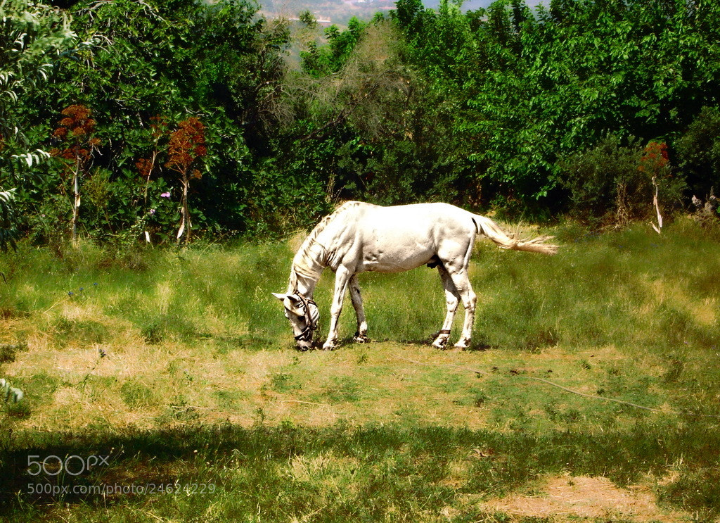Photograph The Old White Horse by MURAT FINDIK on 500px