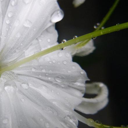 Flowers, Panasonic DMC-FT30