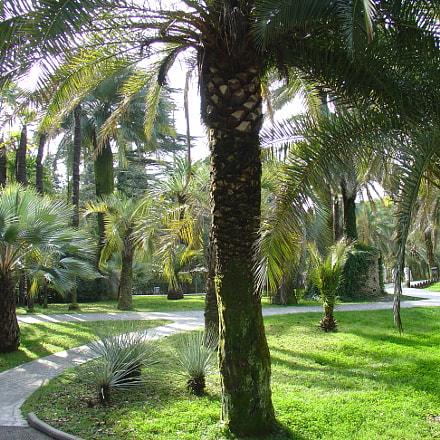 Palms, Sony DSC-V1