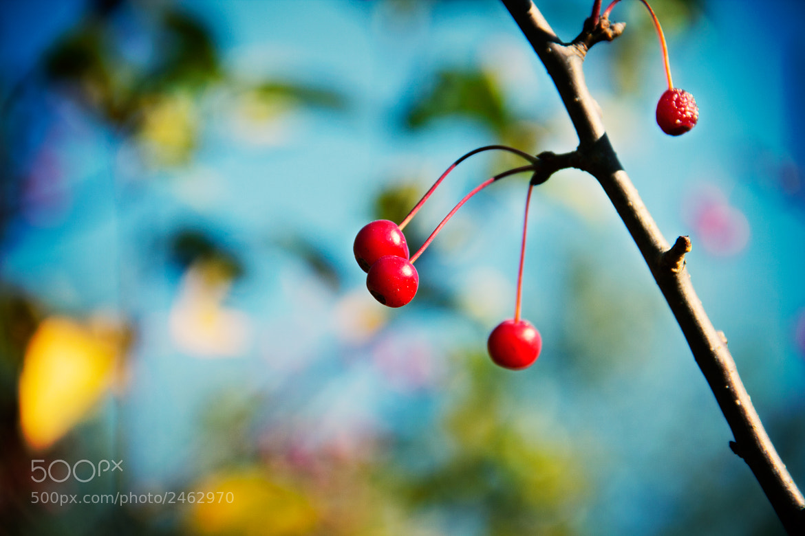 Photograph Berries of the woods by Beth Duri on 500px