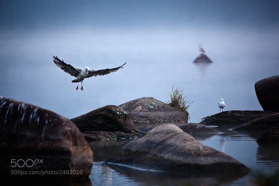 Photograph Gull's life by Alexei Mikhailov on 500px