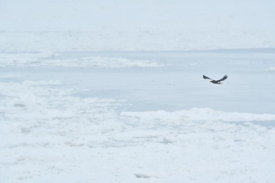 500px.comのKousuke Toyoseさんによる流氷の海で