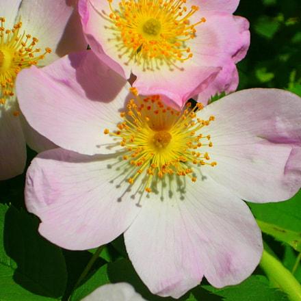 Pink flowers, Panasonic DMC-LS80