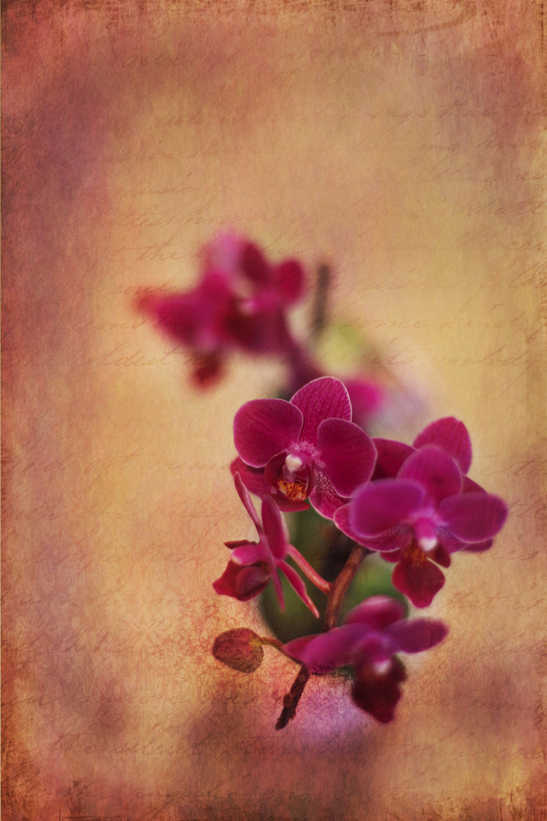 Photograph Orchids by Jean Loper on 500px