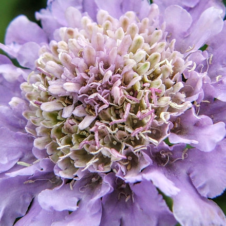 Descanso Gardens 004, Fujifilm FinePix S5100
