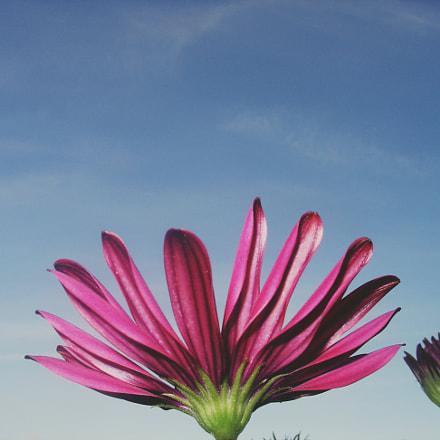 ? flowers, Sony DSC-V1