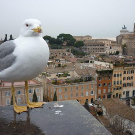 A bird's eye view, Panasonic DMC-FS42