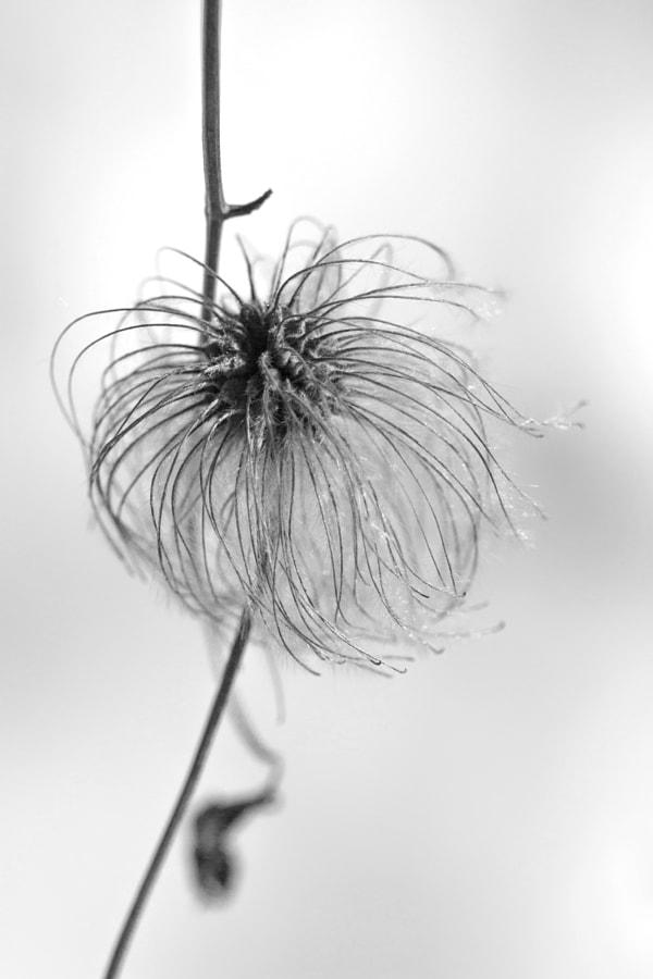 Le toupet (the quiff) de Christine Druesne sur 500px.com