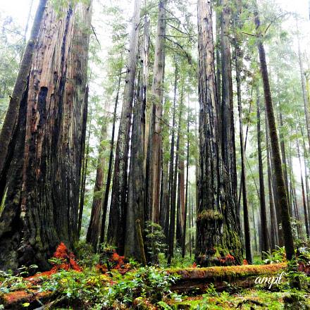 Tree Hugger For Life., Sony DSC-H55