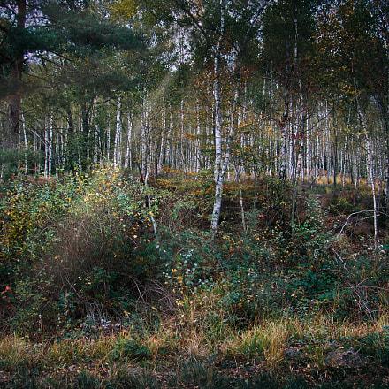Forêt ardennaise Belgique, Sony DSC-F828