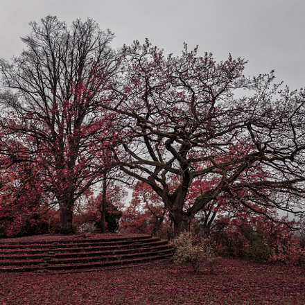 Le Goetheanum Platform