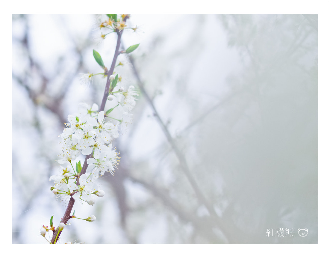 Photograph 霧中花 by Kyle Lin on 500px