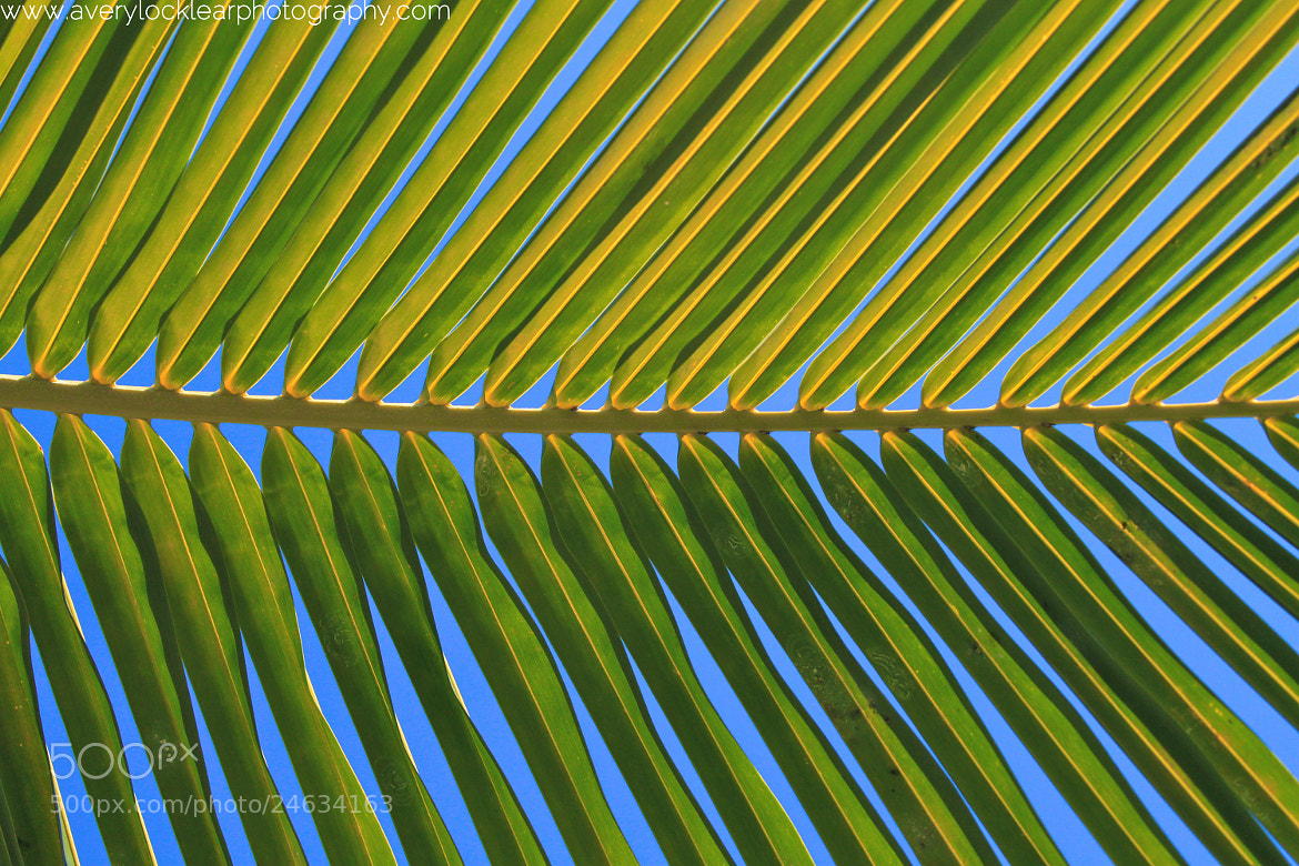 Photograph Frond by Avery Locklear on 500px