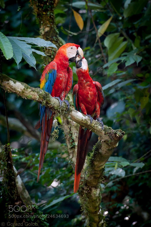 Photograph Amazon love by Gorazd Golob on 500px