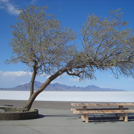 Tree of the Salt, Nikon COOLPIX L2