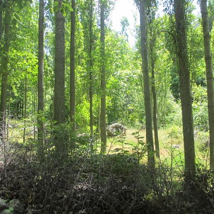 Jungle, Canon IXY 600F