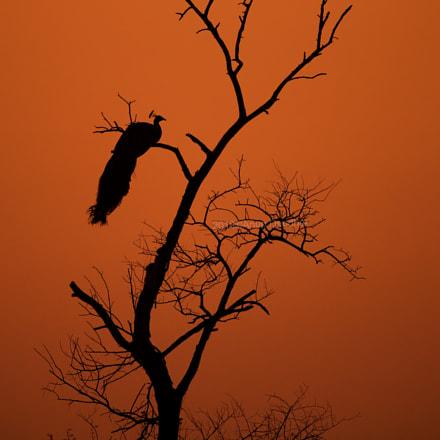 Solitude.., Nikon D5