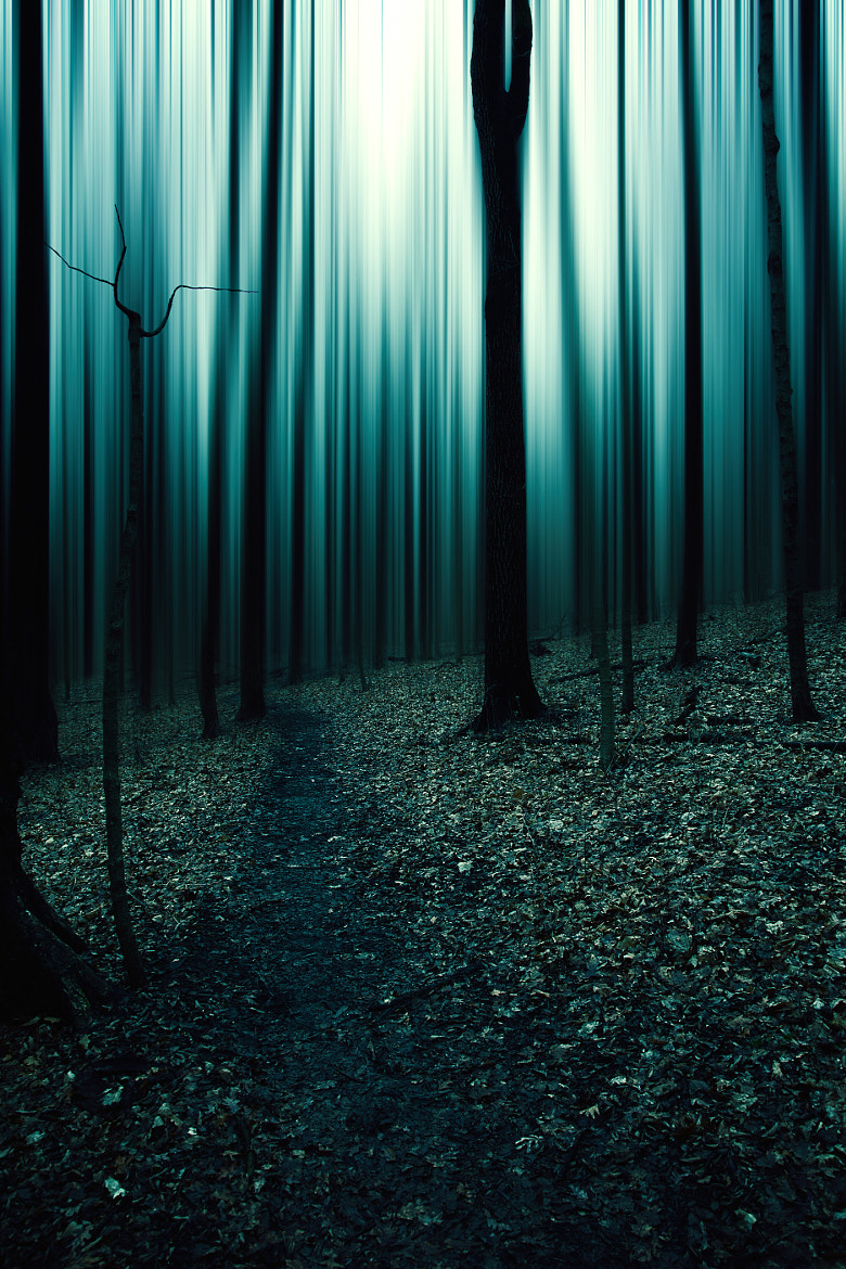Photograph the forest 2 by jeremy vandermeer on 500px
